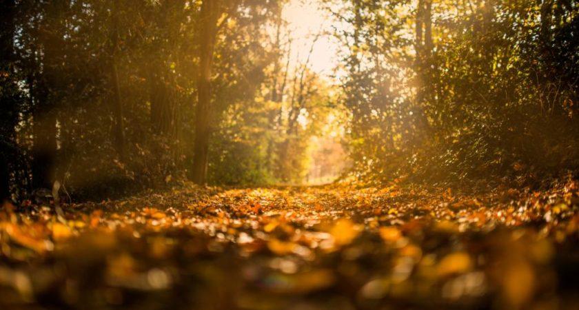 Jesienny sezon biegowy – o czym trzeba pamiętać?