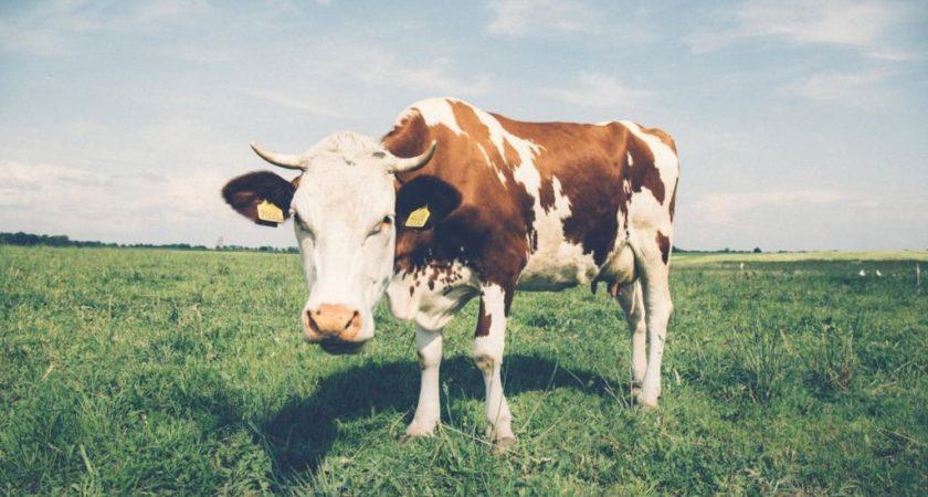 Czym zastąpić mleko krowie w diecie?